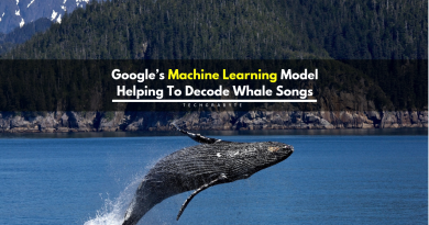 Google's Machine Learning Model Can Decode Humpback Whale Songs